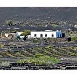 La Geria l Lanzarote