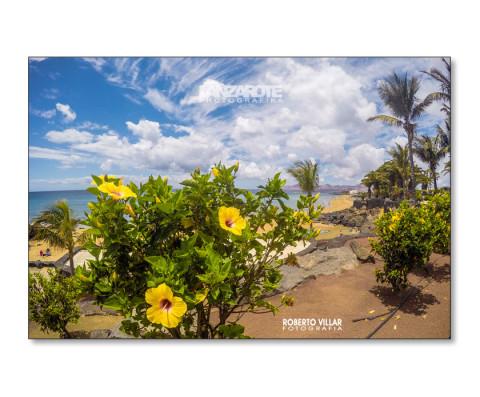 Los Colores de Playa Grande